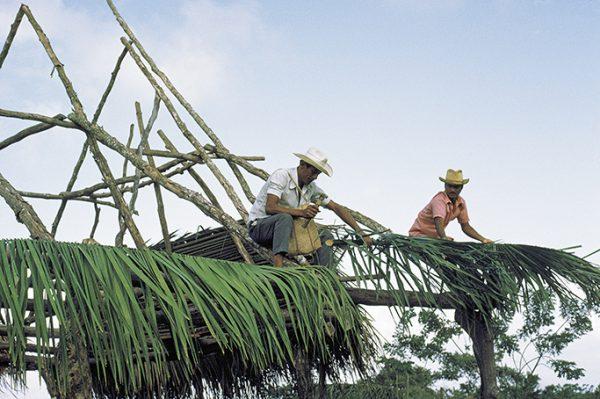 Ein schlichtes Dach aus Palm-Blättern | Fernand Rausser, Bolligen