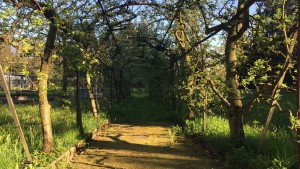 Kapuzinergarten