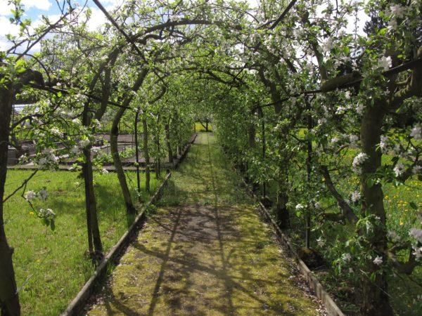 Apfelbaumpergola mit über 50 Bäumen