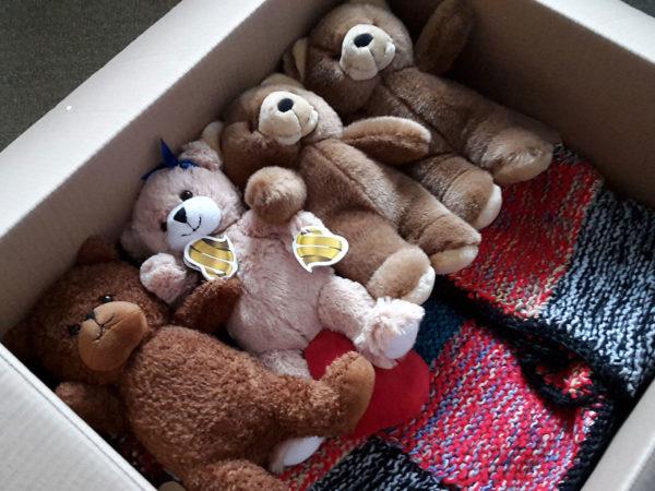 Bären-für-Syrien